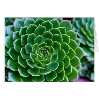 Cartão Succulents - planta de Echeveria