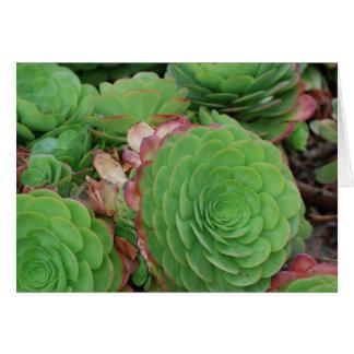 Cartão Succulents (vazio)