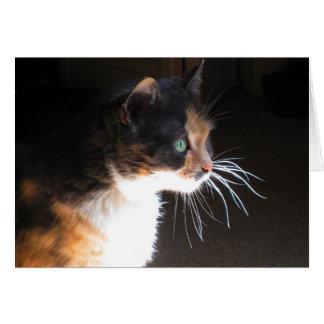 Cartão Suiças do gato de chita