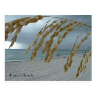 Cartão sul de Miami da praia