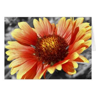 Cartão Sun embebeu a fotografia do Gaillardia