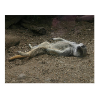 Cartão Sunbathing de Meerkat