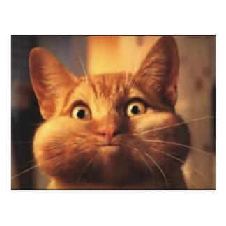 Cartão surpreendido do gato