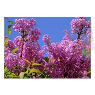 Cartão [Syringa do Lilac das flores coloridas] - alguma