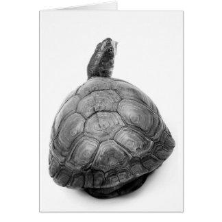 Cartão Tartaruga de caixa em preto e branco