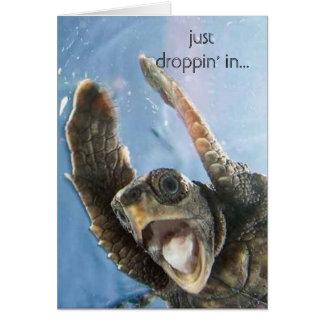 Cartão tartaruga do wheeeeeeeee, apenas droppin em…