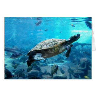 Cartão Tartaruga e peixes