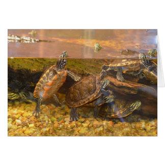 Cartão Tartaruga inchada vermelho (Alabama)