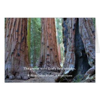 Cartão Templo dos bosques - árvores sagrados da sequóia,