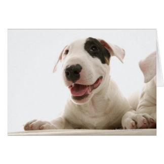 Cartão Terrier de Bull