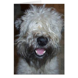 Cartão Terrier Wheaten brandamente revestido