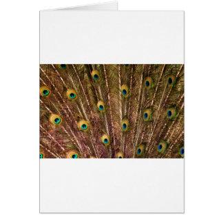 Cartão Teste padrão da pena do pavão
