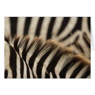Cartão Teste padrão de listras da zebra de Burchell,