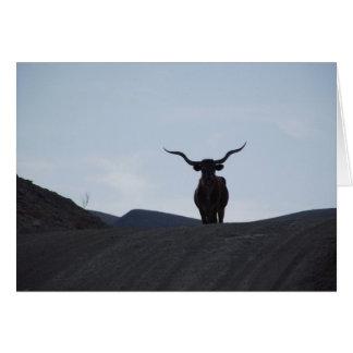 Cartão Texas Longhorn
