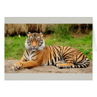 Cartão Tigre de Bengal