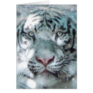 Cartão Tigre do branco do inverno
