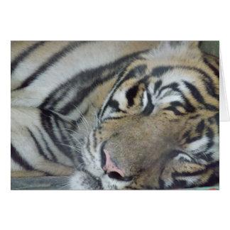 Cartão Tigre do sono
