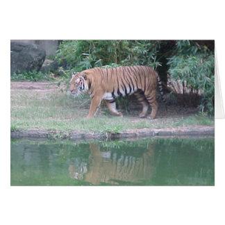 Cartão Tigre entre a Índia e a China
