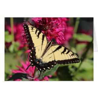 Cartão Tigre oriental Swallowtail no bálsamo de abelha