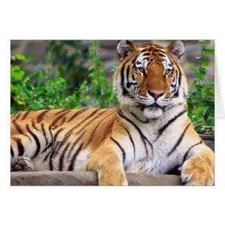 Cartão Tigre Siberian