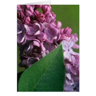 Cartão tímido do Lilac