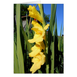 Cartão Tipo de flor amarelo