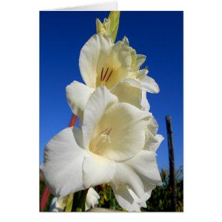 Cartão Tipo de flor branco e o céu azul