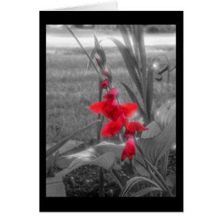 Cartão Tipos de flor vermelhos