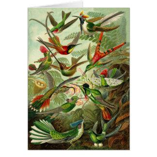 Cartão Todo-Ocasião da ilustração do colibri de Haeckel