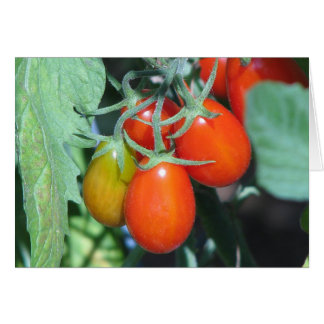 Cartão Tomates crescentes