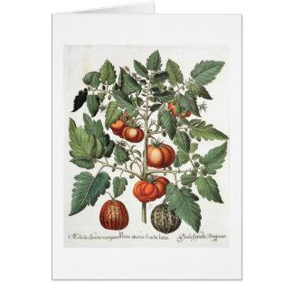 Cartão Tomates e melões: luteo do fructu dos amoris