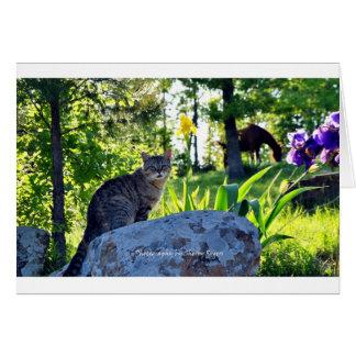 Cartão ~ Top Cat em Rock~