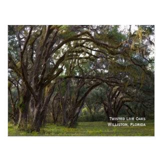 Cartão torcido dos carvalhos verdes americanos