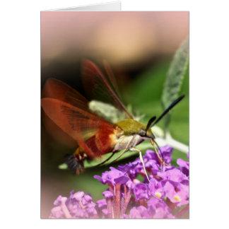 Cartão Traça de falcão de Clearwing - thysbe de Hemaris