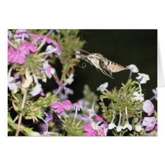 Cartão Traça & Phlox de colibri