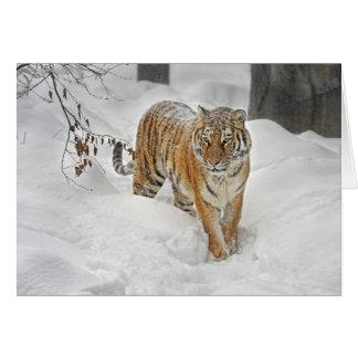 Cartão Trajeto da neve do tigre