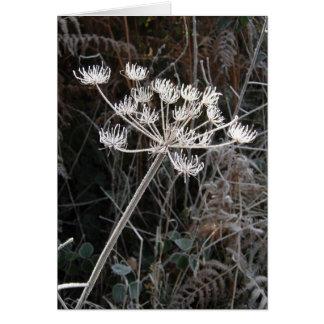 Cartão Transformação de Frost em Cheshire
