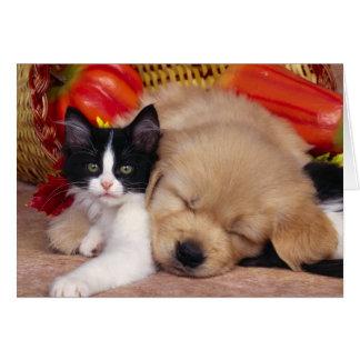 Cartão Travesseiro do gatinho