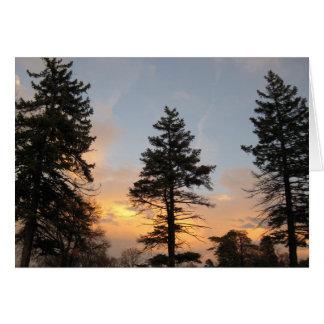 Cartão Três árvores no por do sol do inverno