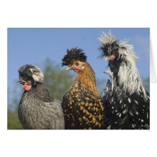 Cartão Três galinhas polonesas Funky - pássaros
