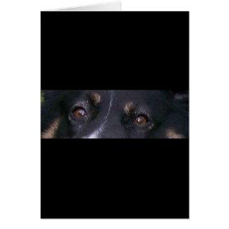 Cartão tri olhos do mini preto australiano do pastor