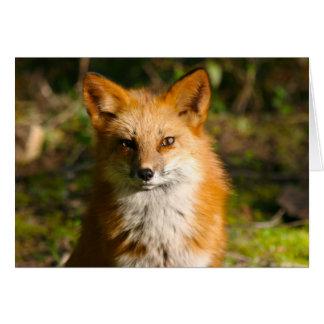 Cartão Trixie a raposa