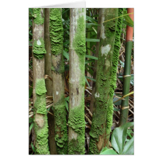 Cartão Troncos da palma cobertos com o musgo