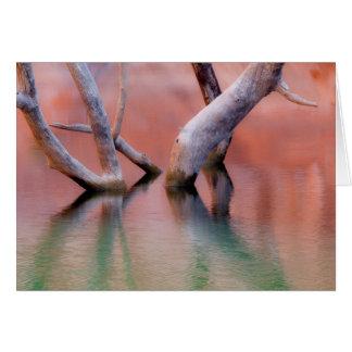Cartão Troncos inoperantes do Cottonwood no lago | Utá