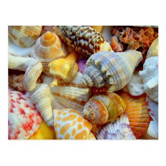Cartão tropicais da fotografia dos Seashells