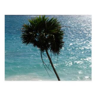 Cartão tropical da palmeira da praia