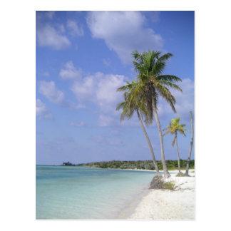cartão tropical da praia