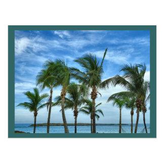 Cartão tropical do costume da tarde