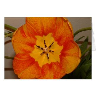 Cartão tulipa alaranjada