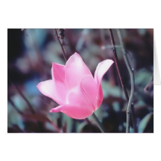 Cartão tulipa cor-de-rosa